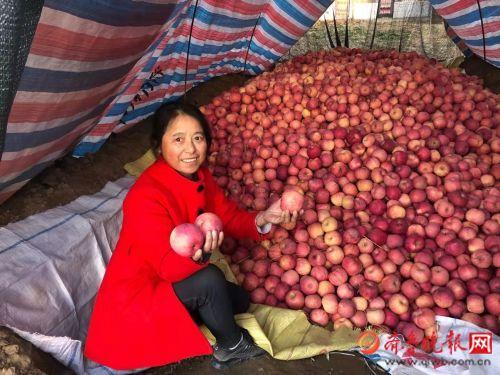 后来居上, 陕西苹果反超全面烟台苹果