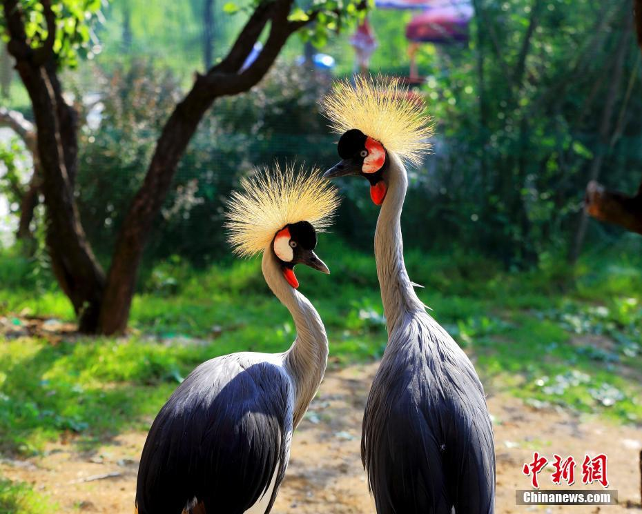 【金赞网址多少】黄坤明在外宣工作会强调:展现真实立体全面的中国