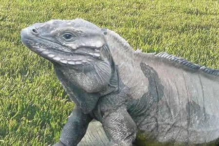 万元买来犀牛蜥蜴 涉嫌交易濒危动物被起诉