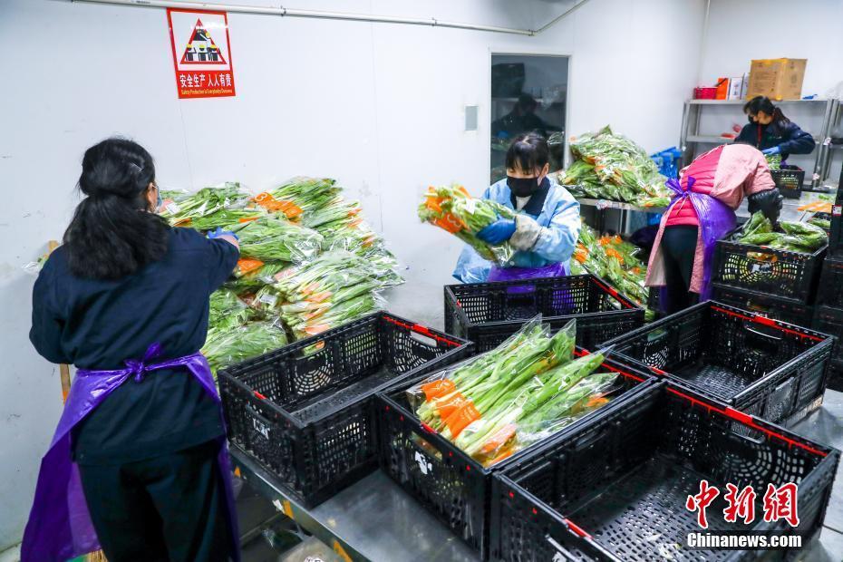 武汉全力保障蔬菜市场供应武汉全力保障蔬菜市场供应