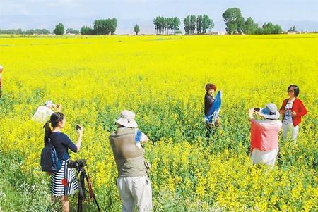 做现代农业的践行者——永昌县农民专业合作社发展纪实