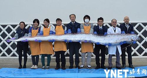 桨鱼吃人的视频_日本海域惊现十多条深海桨鱼 当地人称是地震来临的信号