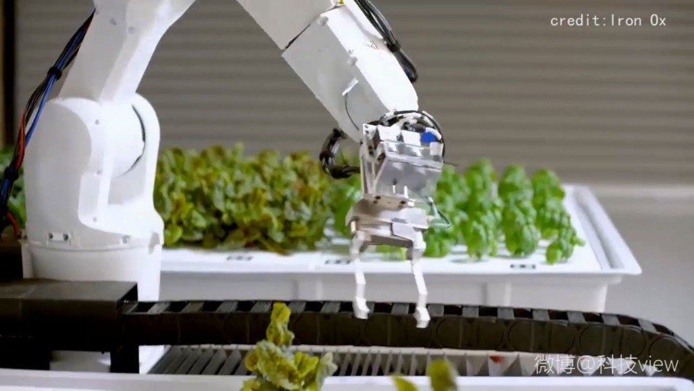 以后你吃的菜是机器人种的