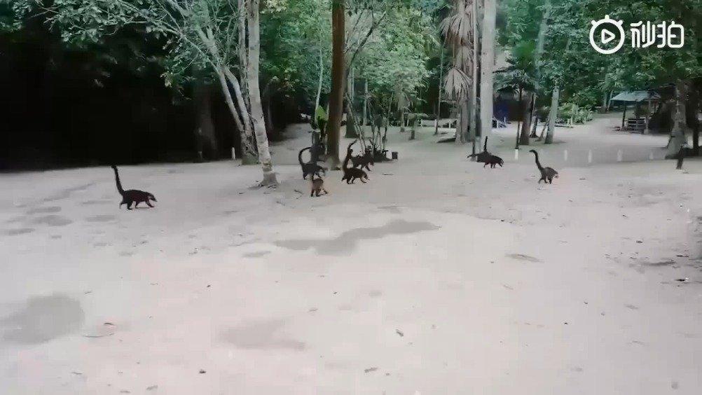 正常播放就是浣熊,倒放就是侏罗纪公园