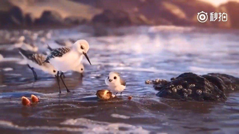 皮克斯动画短片《鹬》完整版!萌爆了的动物世界