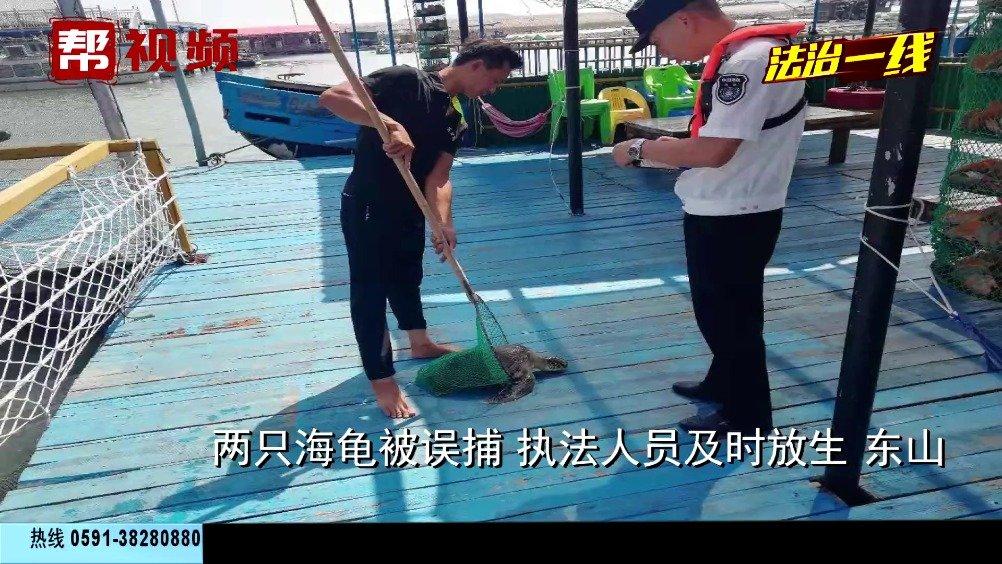 渔民出海捕鱼,误捕两只海龟 ,执法人员及时放生