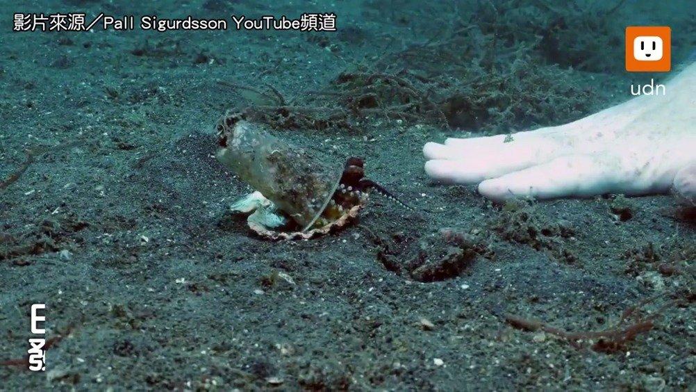 看到小章鱼套着塑料杯真的好难过啊。。。