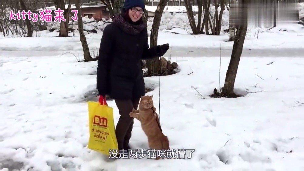 橘猫第一次见到雪,太冻jio jio啊!