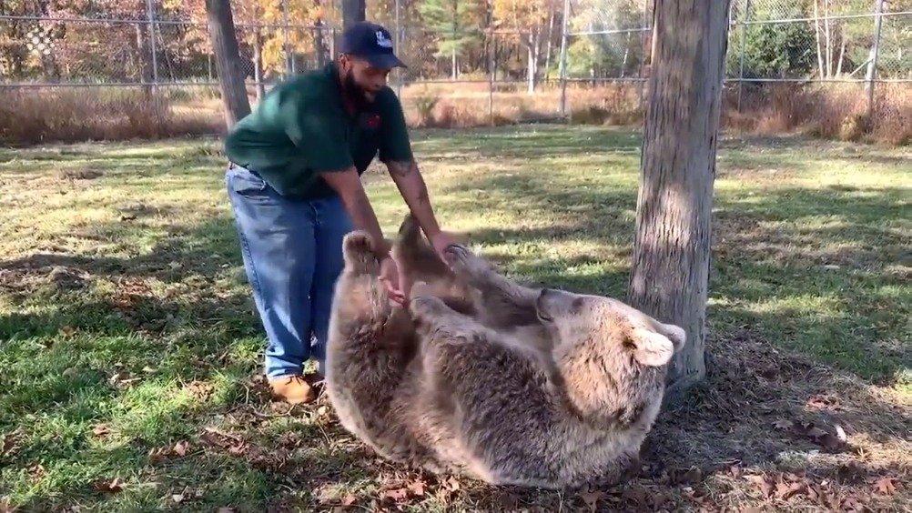 孤儿熊见到曾经的饲养员