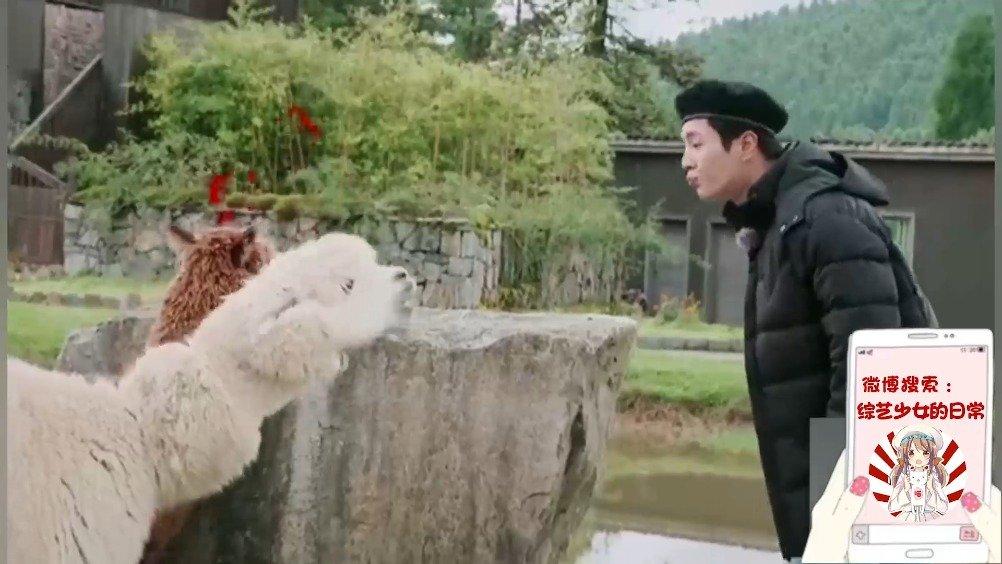李汶翰和羊驼互喷口水