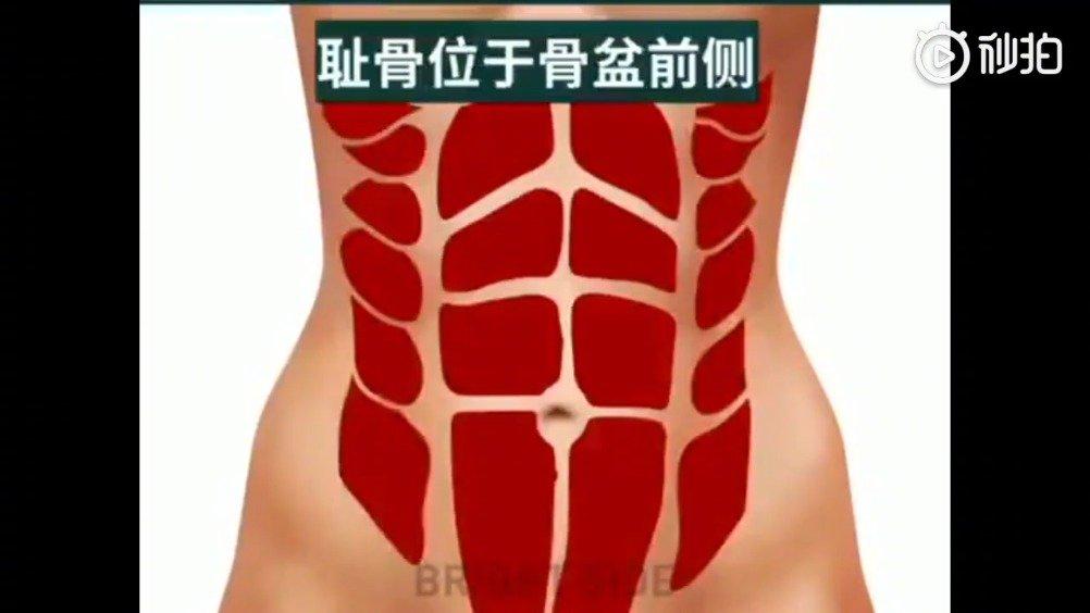 专减肚子肥肉
