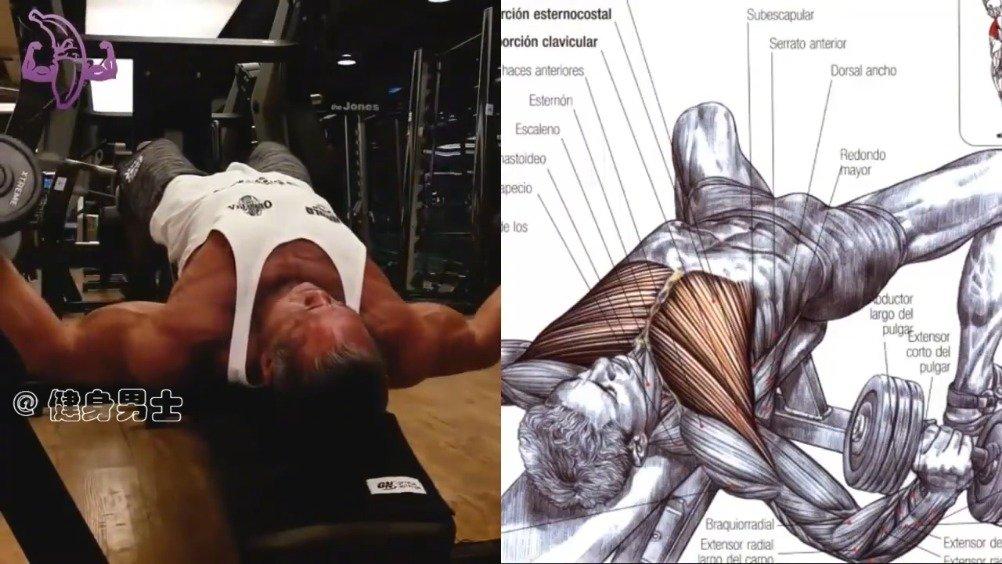 胸肌训练动作加动作图解,让你更深刻的了解动作的发力和肌肉控制