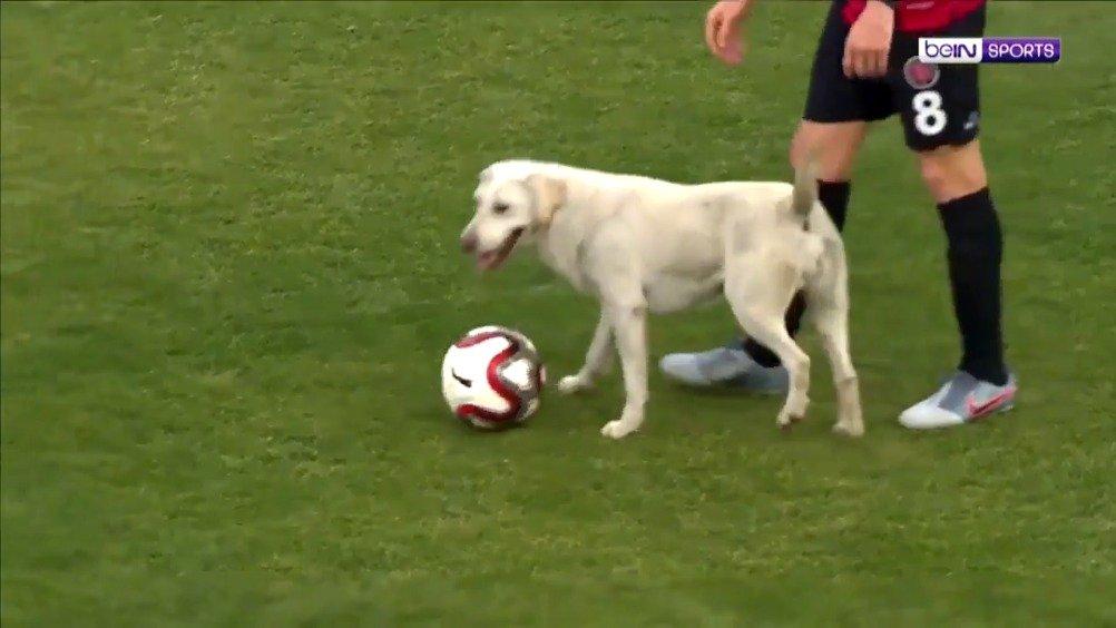 狗狗闯入足球场