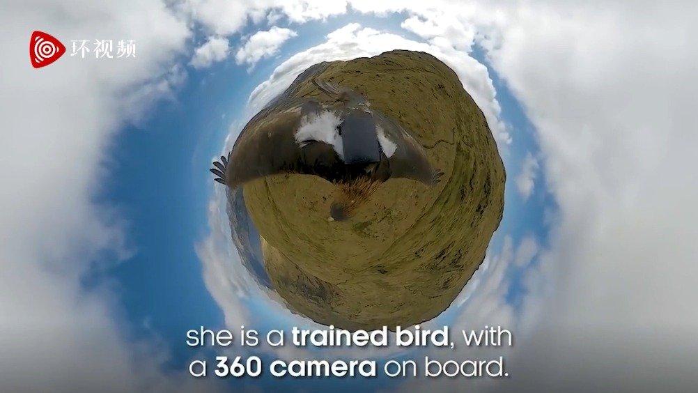 金雕身上绑360°摄影机以鸟瞰视角拍下苏格兰山区美景