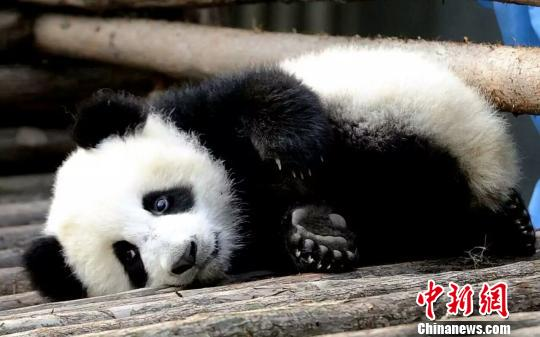 http://www.k2summit.cn/yishuaihao/1094966.html