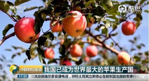 我国成为世界最大苹果生产国!专