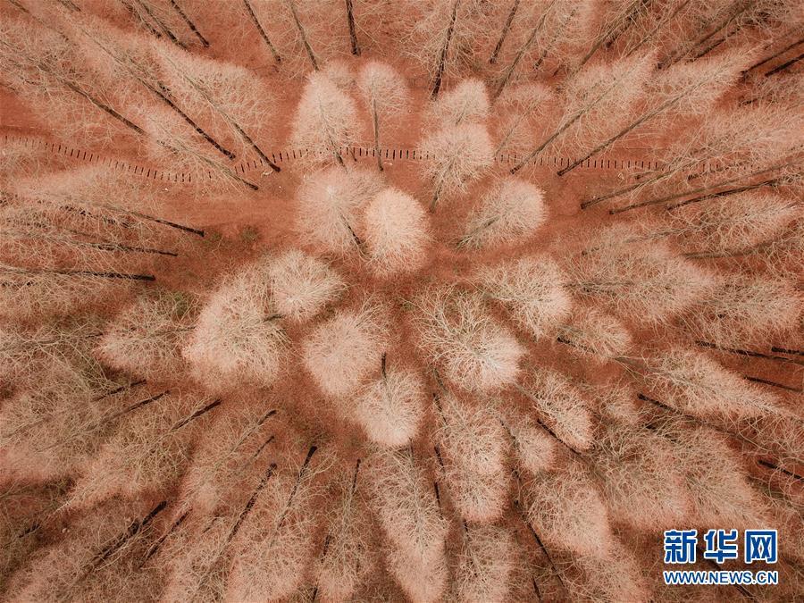 雷克萨斯拟在中国等地推出首款纯电动车