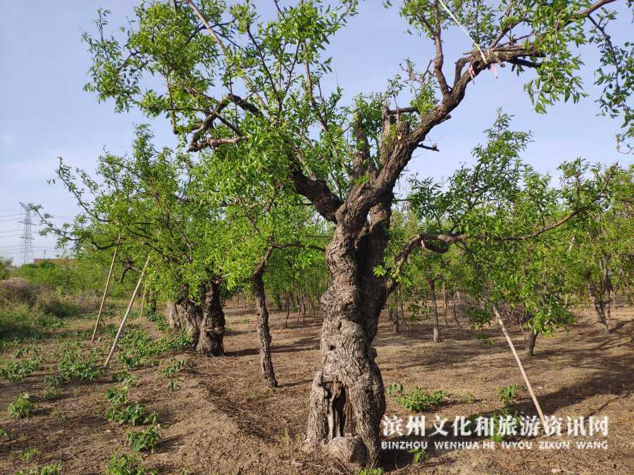 丁国勇:二十余年沾化枣木雕刻技艺的传承者