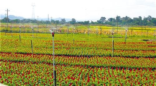 贵州山区农业喷灌设施丰收年受益不止杨明华一人(图)