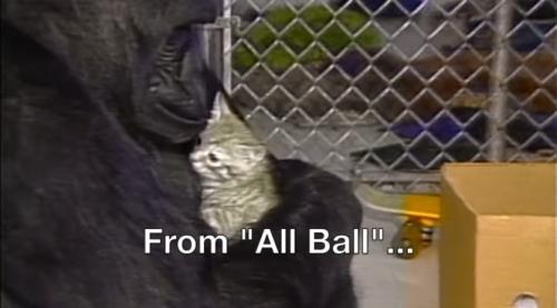 """""""可可""""与它养的猫All Ball。(图片来源:视频截图)"""