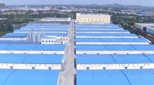 维维股份粮食产业营收超20亿,已成豆奶之外主业新亮点
