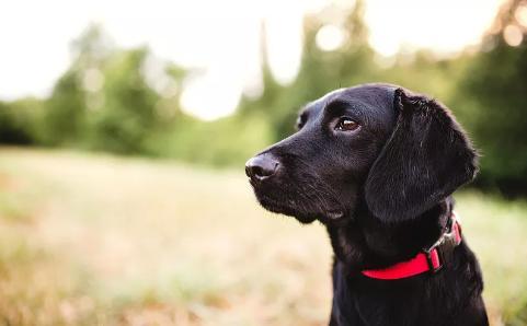 2323名狗主受罚!广州7月以来持续整治不文明养犬