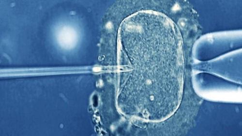 胚胎被储存了几年。(图片来源:BBC中文网)
