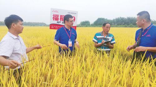 图片新闻:农业专家育种忙
