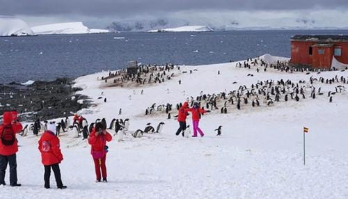 """港媒称""""旅游热""""影响南极生态:破坏环境 干扰"""