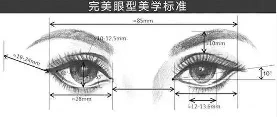 完美的眼型