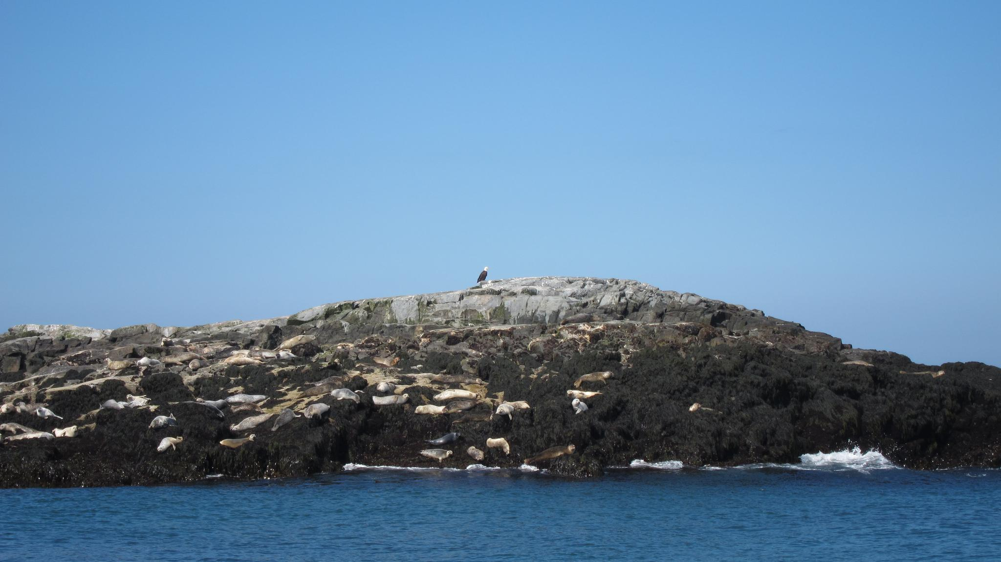 北岩岛上啥也没有,只有一群鸟
