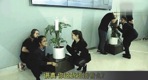 那盆被骂30天的植物,死了?