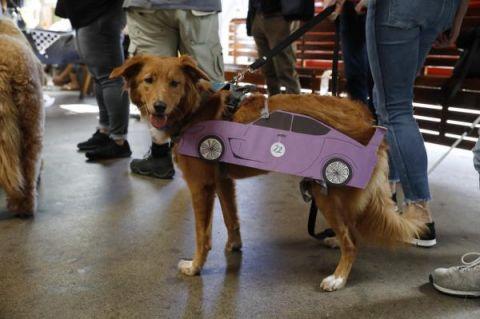 视界   旧金山狗狗着装和赛跑比赛