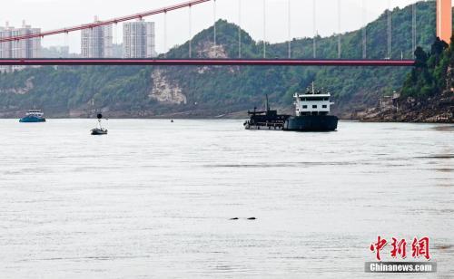 资料图:数头江豚现身长江宜昌段追逐嬉戏。汪军 摄