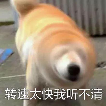 旋转狗子 高速旋转的狗头 自带了马赛克特效 是用绳命在传达的拒绝图片