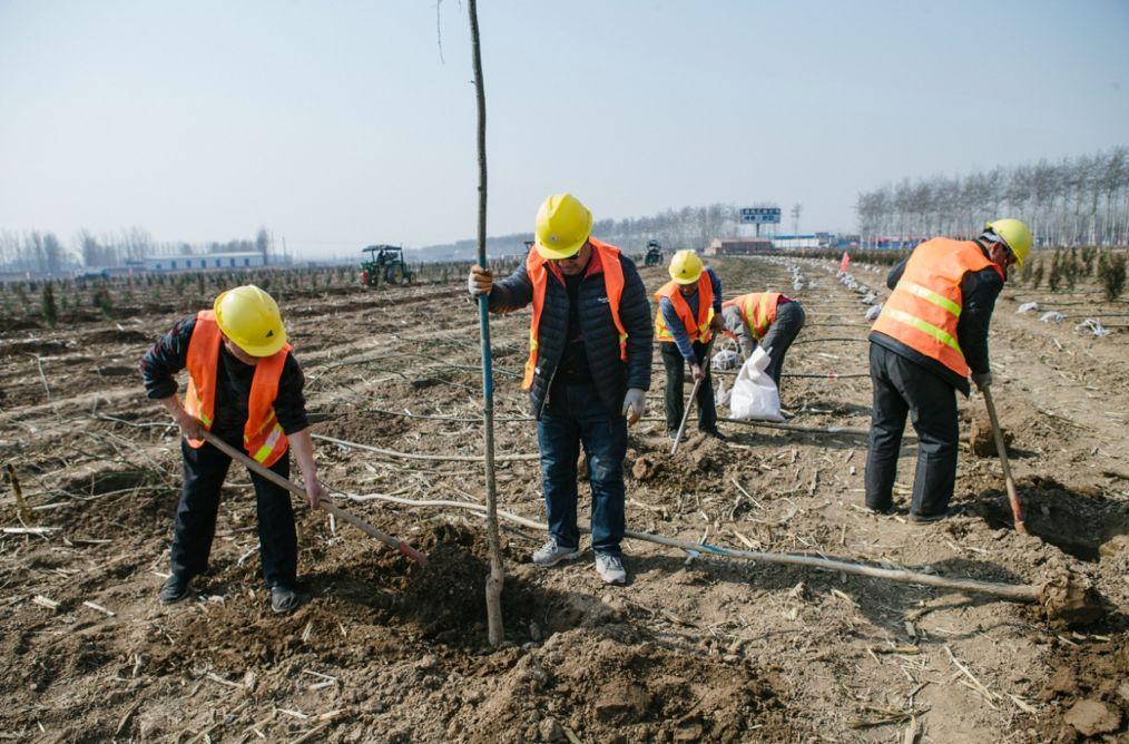 种树搞绿化的人们。李昊摄