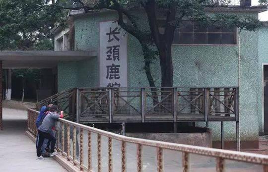 游客在长颈鹿馆参观。