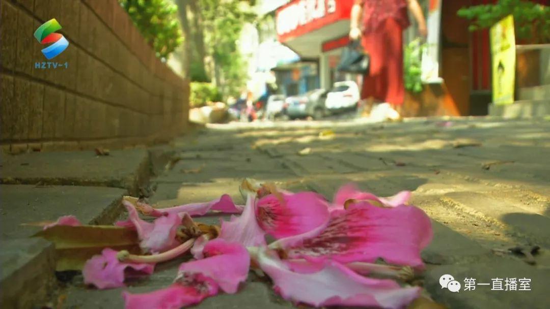 粉红色的惠州,这里有广东最浪漫的秋天~错过再等一年!