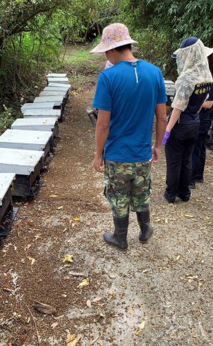 台湾嘉义500万只蜜蜂死亡损失约200万台币 警方调查