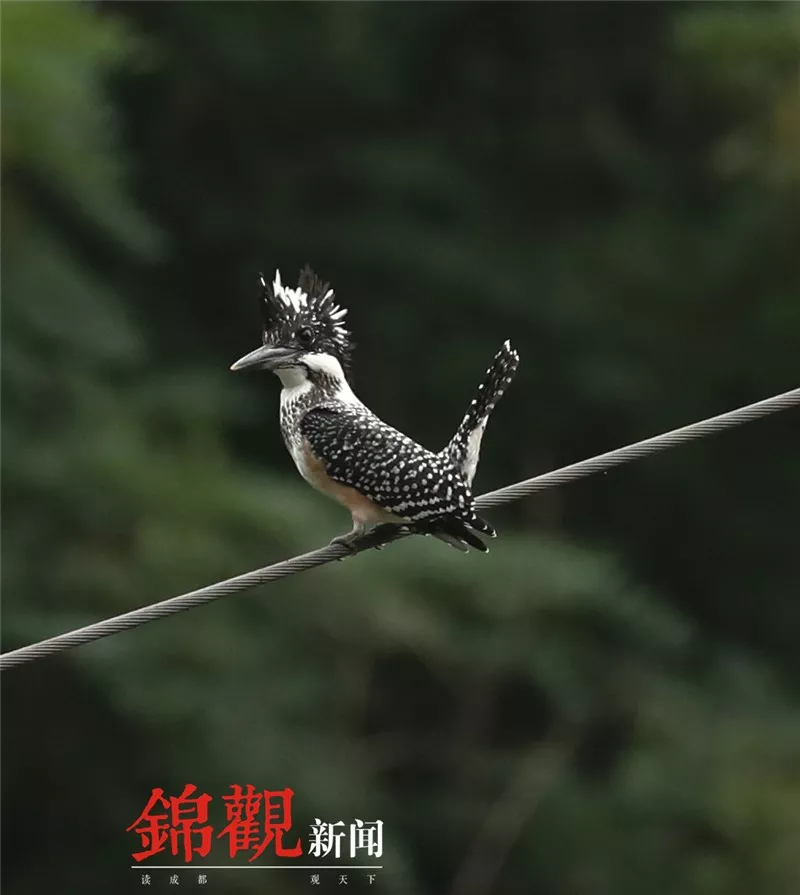 最新娱乐pt送彩金28 - 刘嘉玲脖子上缠着几米长的大蛇,网友:她笑得很勉强!