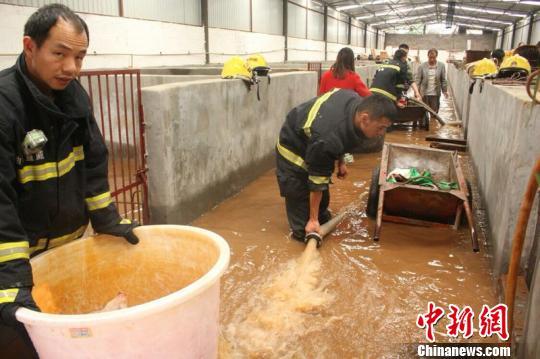 消防官兵在养殖场抽水救猪。 王俊虎 摄