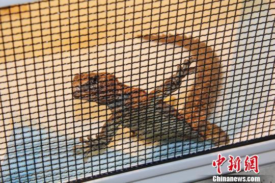 广州查获两起特大网络非法销售野生动物案