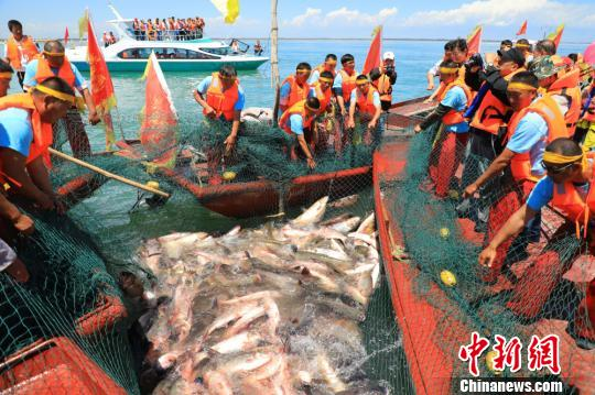6月23日,在新疆博斯腾湖里渔民起网捕鱼。 年磊 摄