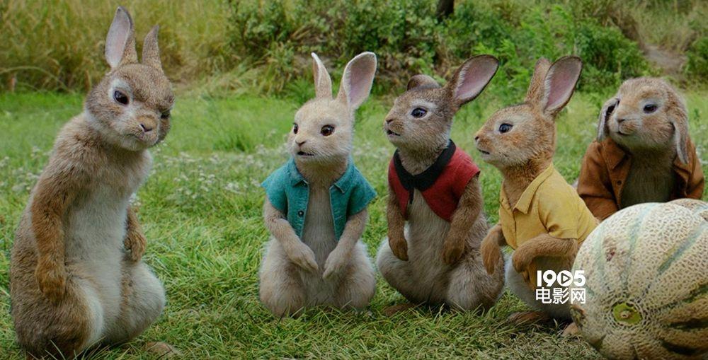 《比得兔》菜园乱斗频出怪招 兔子家族制霸农场