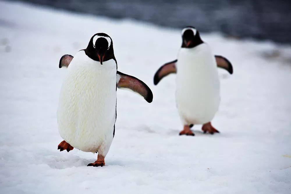 哈尔滨比南北极还要冷,这张图刷爆朋友圈,真的假的?