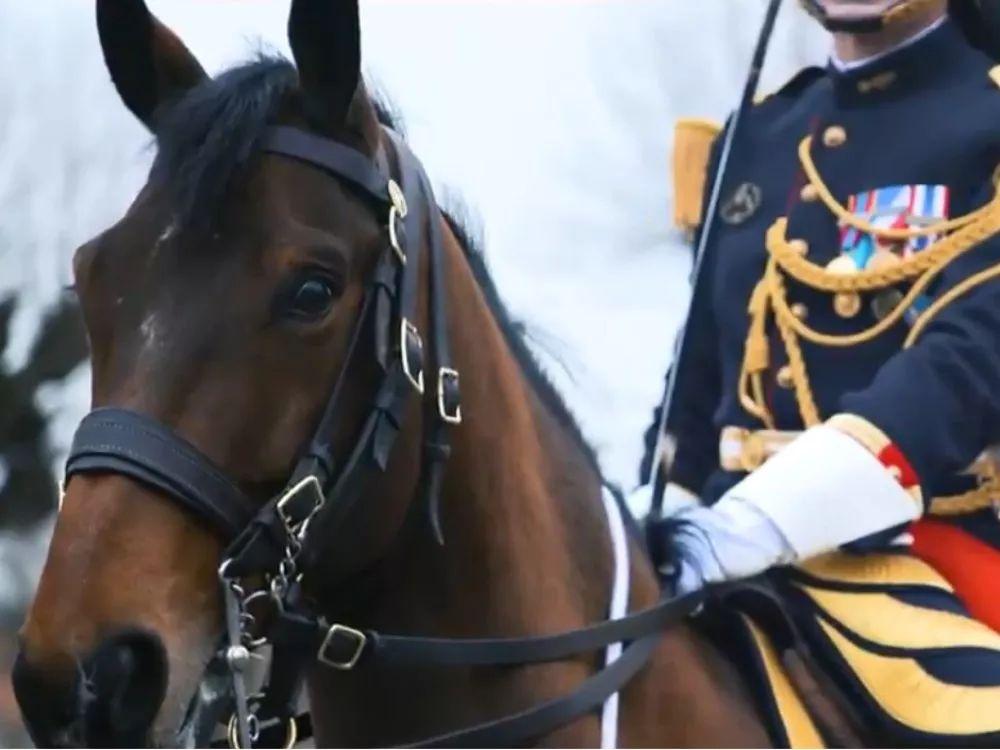 """▲作为礼物的8岁棕色公马——""""维苏威火山"""",来自法国总统的骑兵卫队。"""