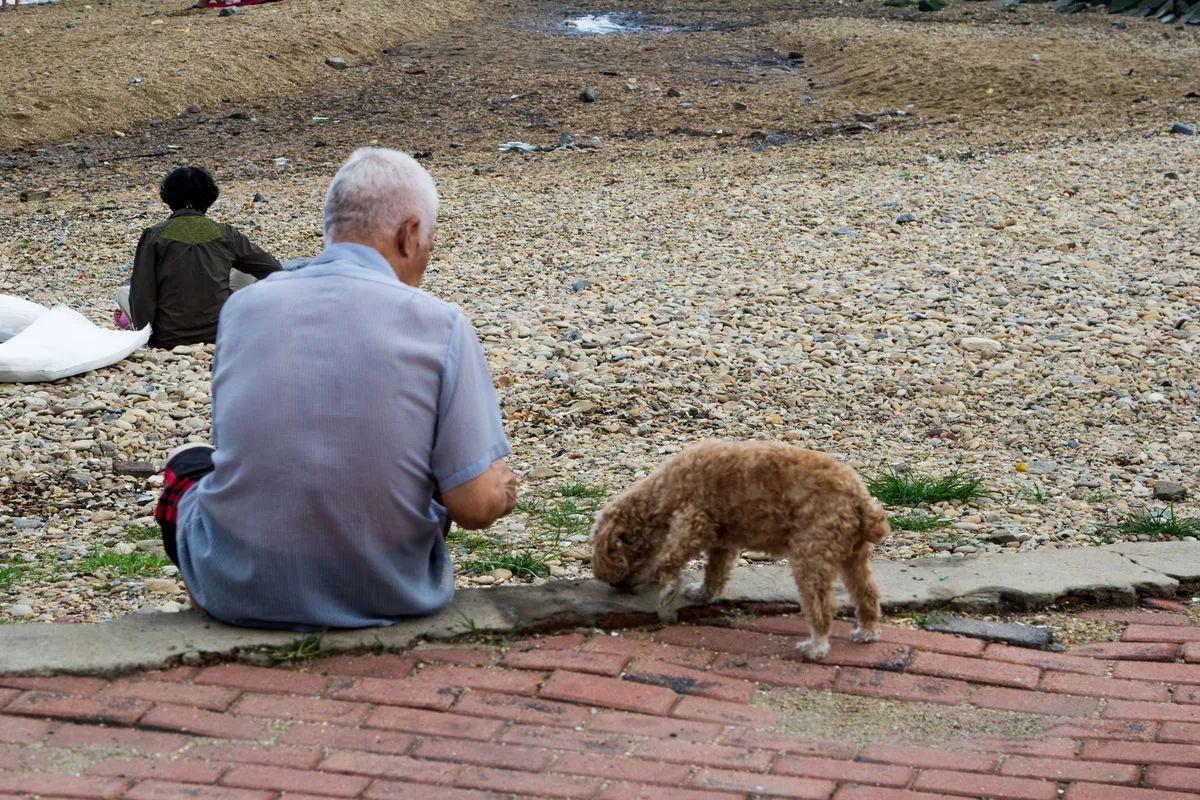 之后,老杜加入了海南省小动物保护协会,和妻子一起收养救助流浪狗.