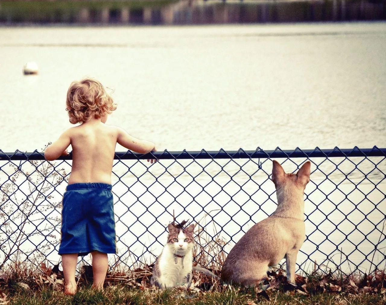 [猫和狗哪个聪明]猫和狗到底谁聪明?这个世界难题终于有答案了