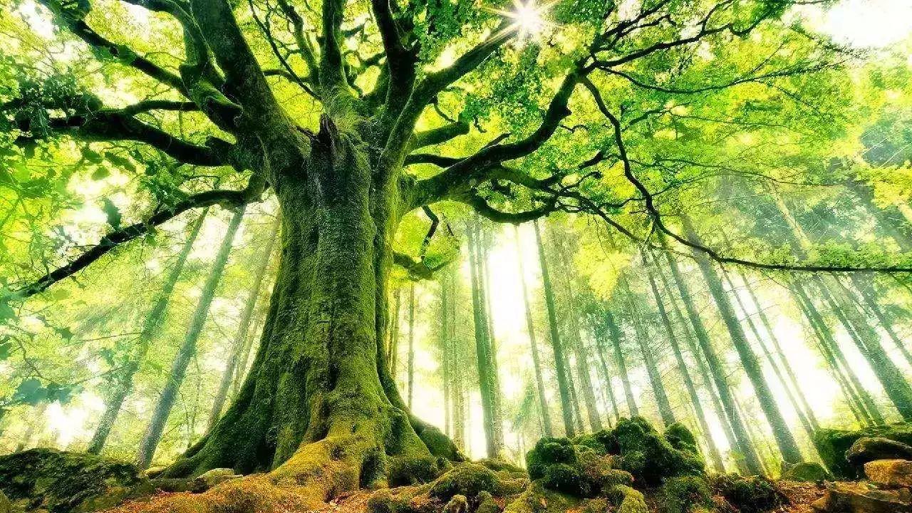夜读丨大树之恩(看哭很多人)|大树|男孩|果子_新浪新闻
