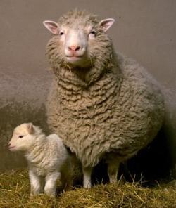 多利和她的头生小羊Bonnie